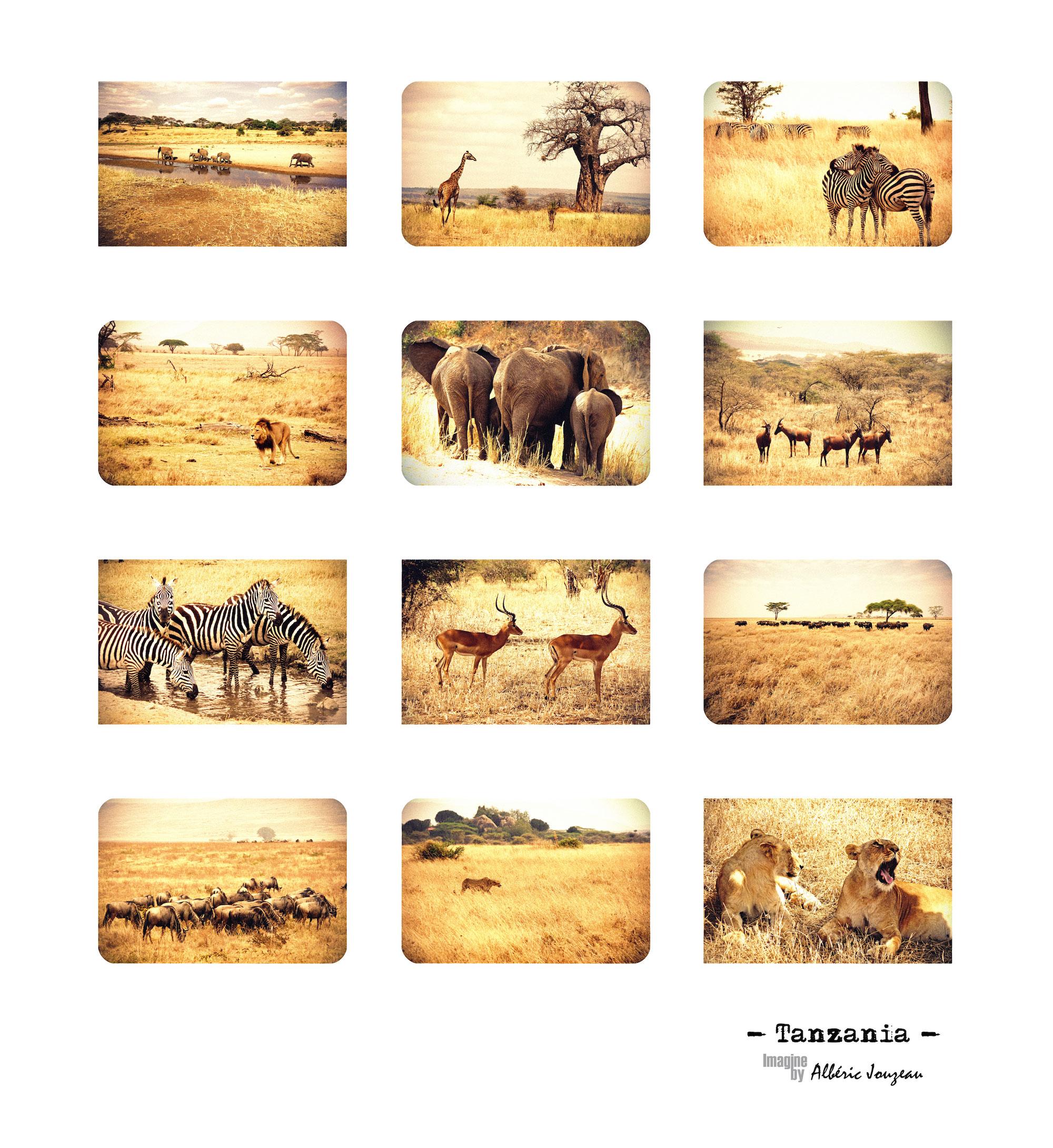 tanzania-compo-alberic-jouzeau-imagine-tableau